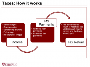 The cycle of taxes